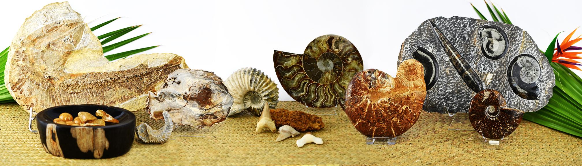 Fossilien, Muscheln und mehr ...