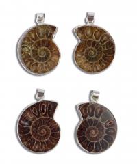 Ammoniten Anhänger Paare