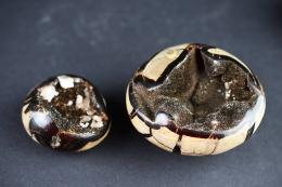 Septarie Eier wild