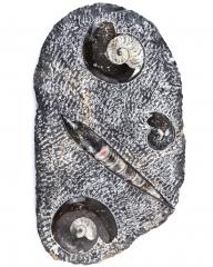 Fossilien Platte